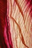 Blumenblatt-Auslegung-Hintergrund Stockfotos
