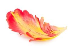 Blumenblatt einer Tulpe Makro Stockfotos