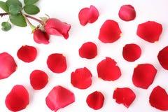 Blumenblatt und stieg Stockfotografie