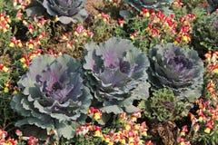 Blumenblattdeckung Stockfoto
