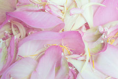 Blumenblattlotoshintergrund Lizenzfreie Stockfotografie