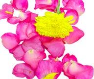 Blumenblattrosa mit gelber Blume Stockbilder