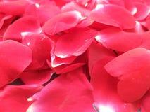 Blumenblattrosen Hintergrund, Valentinsgrußtag lizenzfreie stockfotos