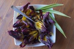 Blumenblattsuppe Stockfotos