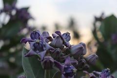 Blumenblau mit unscharfem Hintergrund lizenzfreie stockbilder