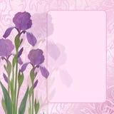 Blumenblende auf rosafarbenem Hintergrund Stockfotos