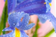 Blumenblenden Stockfotos