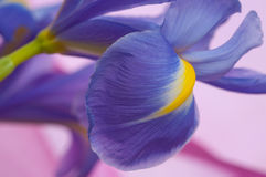 Blumenblenden Lizenzfreies Stockbild
