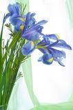 Blumenblenden Lizenzfreie Stockfotografie