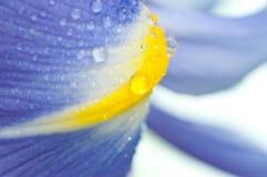 Blumenblenden Lizenzfreie Stockbilder