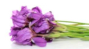 Blumenblenden, getrennt. Stockfotos