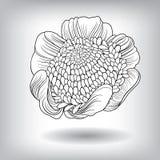 Blumenblumen-Elemente für Design Stockbild