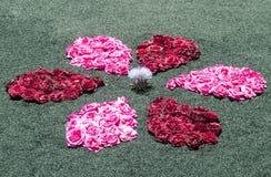 Blumenblumenblätter Stockfoto