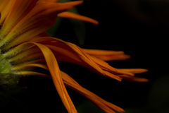 Blumenblumenblätter Lizenzfreie Stockfotografie