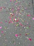 Blumenblumenblätter auf der Straße während des Festivals lizenzfreie stockbilder