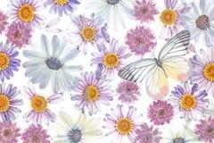 Blumenblumenblatthintergrund lizenzfreies stockfoto