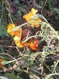 Blumenblumenblumen-Naturnatur Lizenzfreies Stockbild