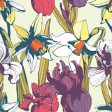 Blumenblumennarzissen iris nahtlose Hand gezeichnetes Muster Colore Stockfotos