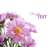 Blumenblumenstrauß Stockfotografie