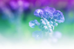 Blumenbonbon Lizenzfreie Stockbilder