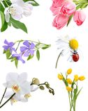 Blumencollage Stockbild