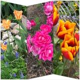 Blumencollage stockfotos