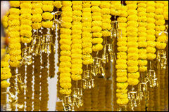Blumendekor Ringelblume Stockfotos