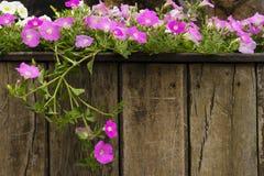 Blumendekoration im Garten Lizenzfreie Stockfotografie