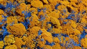 Blumendekoration in Orange und in Blauem Stockbild