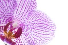 Blumendetail getrennt auf Weiß Stockfotos