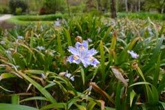 Blumendetail im Garten lizenzfreies stockbild