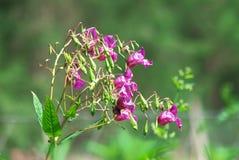 Blumendetails Stockfoto