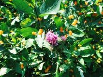 Blumendorne stockbilder