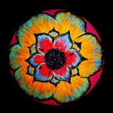 Blumendruckschwarzrückseitenboden Lizenzfreie Stockbilder