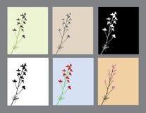 Blumeneinladungen eingestellt Lizenzfreies Stockfoto