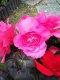 Blumeneinstellungen lizenzfreies stockfoto