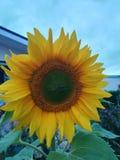 Blumeneinstellungen stockbild