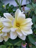 Blumeneinstellungen lizenzfreies stockbild
