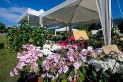 Blumenerscheinen Lizenzfreies Stockfoto
