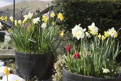 Blumenfässer addieren Beschränkungsberufung Lizenzfreie Stockfotografie