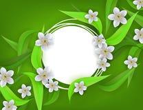 Blumenfahne mit weißen Apfel- oder Kirschblüten und Grünblättern um leeren Ausweis mit Kopienraum Lizenzfreie Stockfotografie