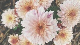 Blumenfall Stockbild