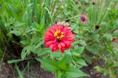 Blumenfarbe Lizenzfreie Stockbilder