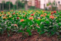 Blumenfarben Lizenzfreies Stockfoto