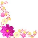 Blumenfeld lizenzfreie stockbilder