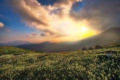 Blumenfeld bei Sonnenuntergang Lizenzfreie Stockbilder