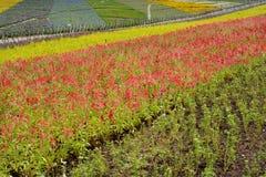 Blumenfeld in den Farben Stockfoto