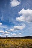 Blumenfeld am Frühling Stockfotos