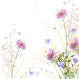 Blumenfeld - Frühling oder Sommerhintergrund Stockbilder