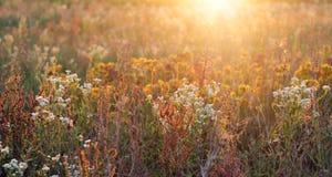Blumenfeld im Sonnenschein lizenzfreies stockfoto